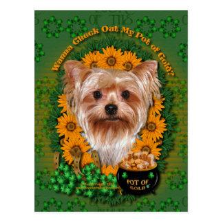 St Patricks - Pot of Gold - Yorkshire Terrier Postcard