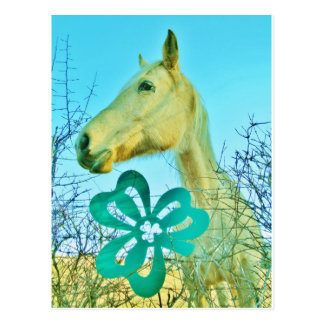 St patty s Day Horse Post Card