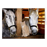 Stable Buds Greeting Card