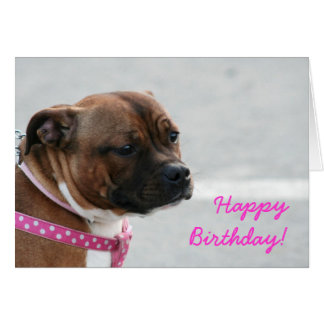 staffordshire bull terrier Birthday greeting card
