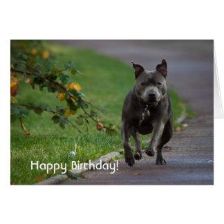 Staffordshire Bull Terrier Card