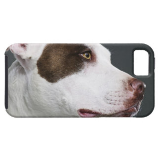 Staffordshire bull terrier, close-up iPhone 5 cover