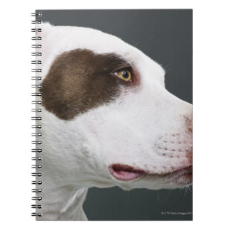 Staffordshire bull terrier, close-up notebook