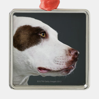 Staffordshire bull terrier, close-up Silver-Colored square decoration