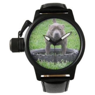 Staffordshire_Bull_Terrier_Crown_Protector_Watch Watch