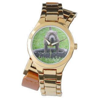 Staffordshire_Bull_Terrier_Ladies_Gold_Watch Watch