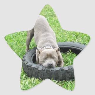 Staffordshire Bull Terrier, One Chomp, Star Sticker