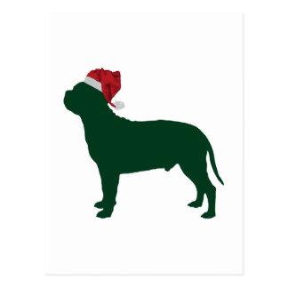 Staffordshire Bull Terrier Postcard