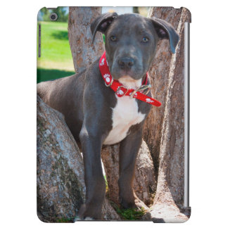 Staffordshire Bull Terrier puppy in a tree
