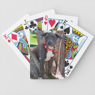 Staffordshire Bull Terrier puppy in a tree Bicycle Playing Cards