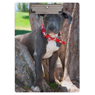 Staffordshire Bull Terrier puppy in a tree Clipboard