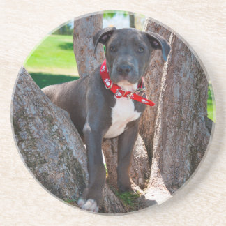 Staffordshire Bull Terrier puppy in a tree Coaster