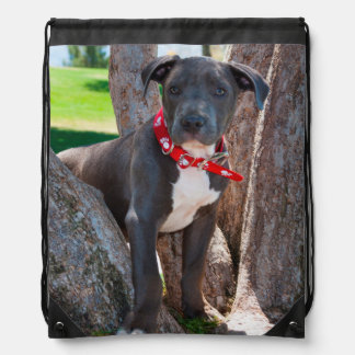 Staffordshire Bull Terrier puppy in a tree Drawstring Bag