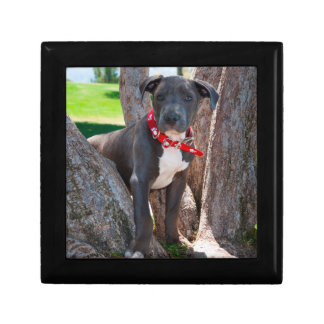Staffordshire Bull Terrier puppy in a tree Gift Box