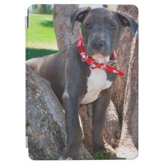 Staffordshire Bull Terrier puppy in a tree iPad Air Cover