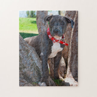 Staffordshire Bull Terrier puppy in a tree Jigsaw Puzzle