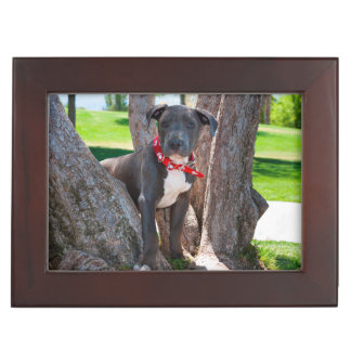 Staffordshire Bull Terrier puppy in a tree Keepsake Box