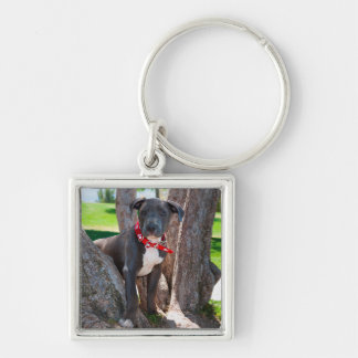 Staffordshire Bull Terrier puppy in a tree Key Ring