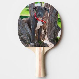 Staffordshire Bull Terrier puppy in a tree Ping Pong Paddle