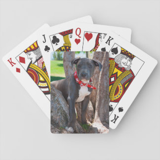Staffordshire Bull Terrier puppy in a tree Playing Cards