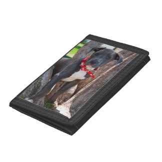 Staffordshire Bull Terrier puppy in a tree Trifold Wallets