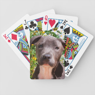 Staffordshire Bull Terrier puppy portrait Bicycle Playing Cards