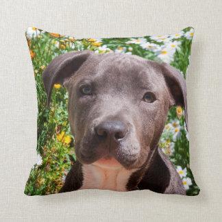 Staffordshire Bull Terrier puppy portrait Cushion