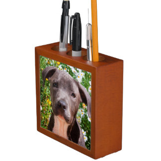 Staffordshire Bull Terrier puppy portrait Desk Organiser