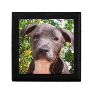 Staffordshire Bull Terrier puppy portrait Gift Box