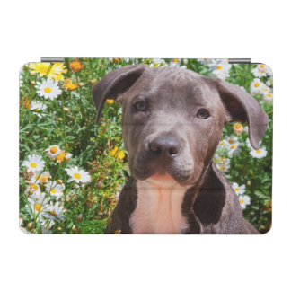 Staffordshire Bull Terrier puppy portrait iPad Mini Cover