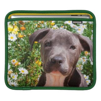 Staffordshire Bull Terrier puppy portrait iPad Sleeve