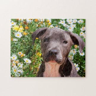 Staffordshire Bull Terrier puppy portrait Jigsaw Puzzle