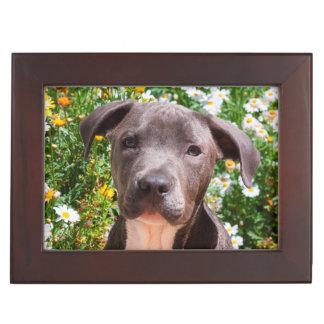 Staffordshire Bull Terrier puppy portrait Keepsake Box