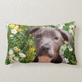 Staffordshire Bull Terrier puppy portrait Lumbar Cushion