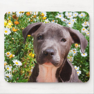 Staffordshire Bull Terrier puppy portrait Mouse Pad