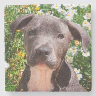 Staffordshire Bull Terrier puppy portrait Stone Coaster