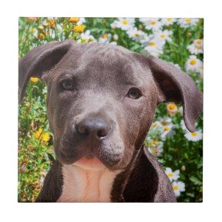 Staffordshire Bull Terrier puppy portrait Tile