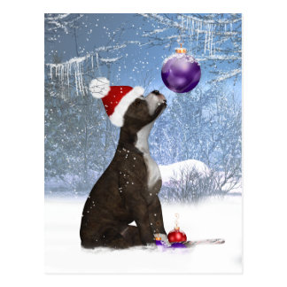 Staffordshire Bull Terrier Puppy - Postcard Winter