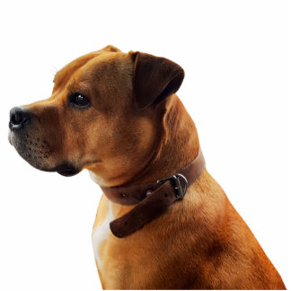 Staffordshire Bull Terrier Standing Photo Sculpture