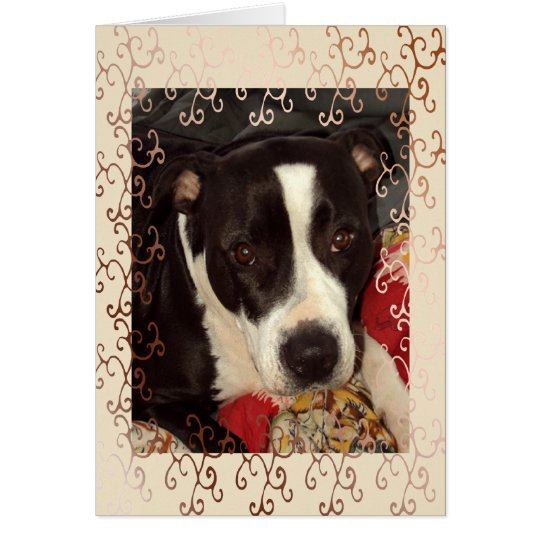Staffordshire Terrier Blank Card