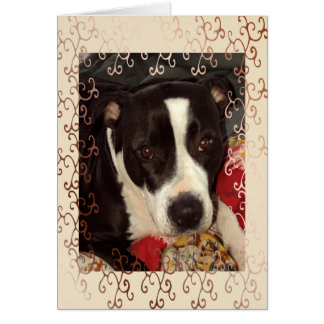 Staffordshire Terrier Blank Greeting Card
