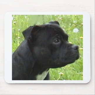 staffy.png mouse mat