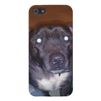 Staffy Skin iPhone 5 Covers
