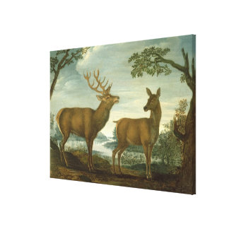 Stag and hind in a wooded landscape canvas print