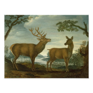 Stag and hind in a wooded landscape poster