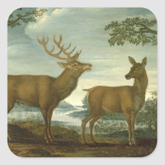 Stag and hind in a wooded landscape square sticker