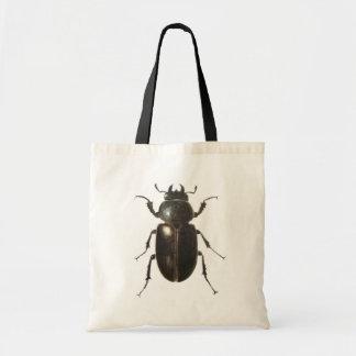 Stag Beetle 2011