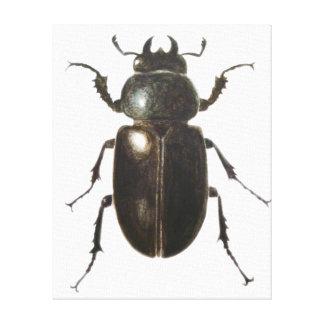 Stag Beetle 2011 Canvas Print