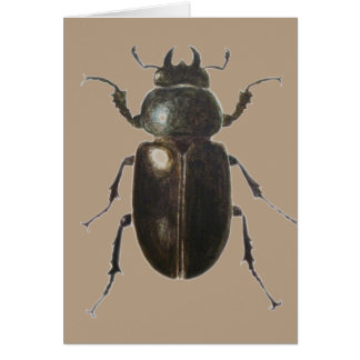 Stag Beetle 2011 Card