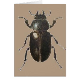 Stag Beetle 2011 Card